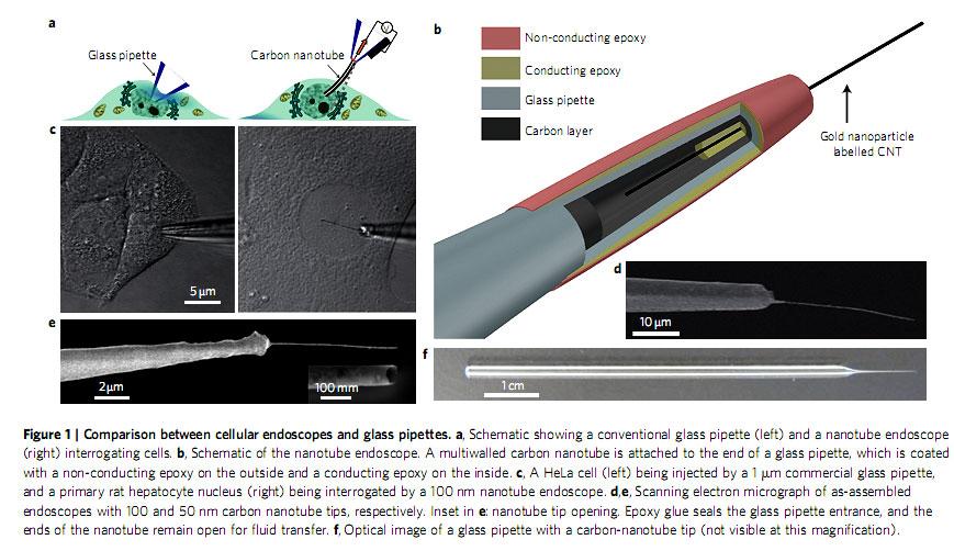 cellular probe
